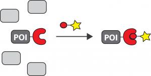 bioorthogonal-chemistry